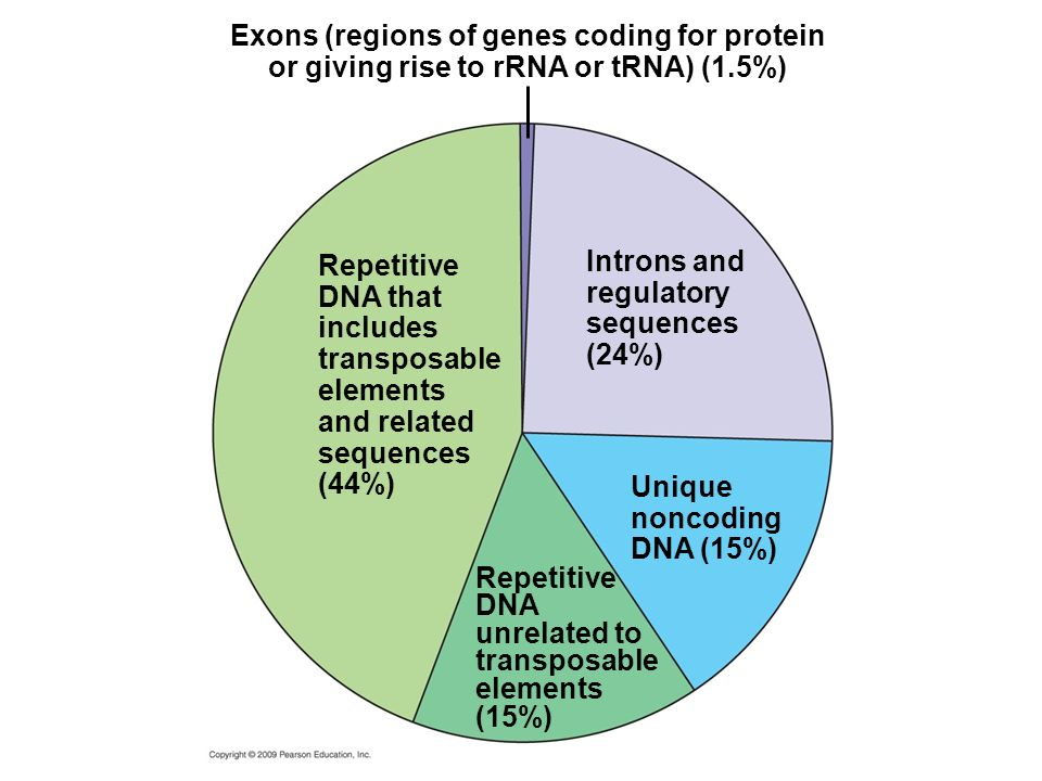 Exons (regions of genes coding for protein