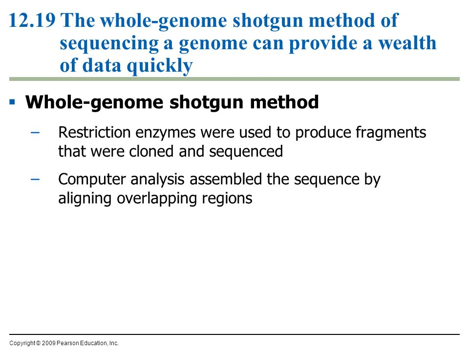 12.19 The whole-genome shotgun method of sequencing a genome can provide a wealth of data quickly