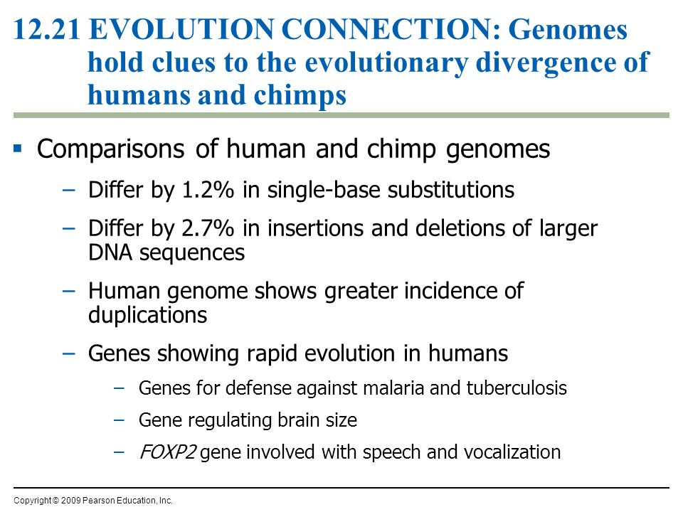 12.21 EVOLUTION CONNECTION: Genomes hold clues to the evolutionary divergence of humans and chimps