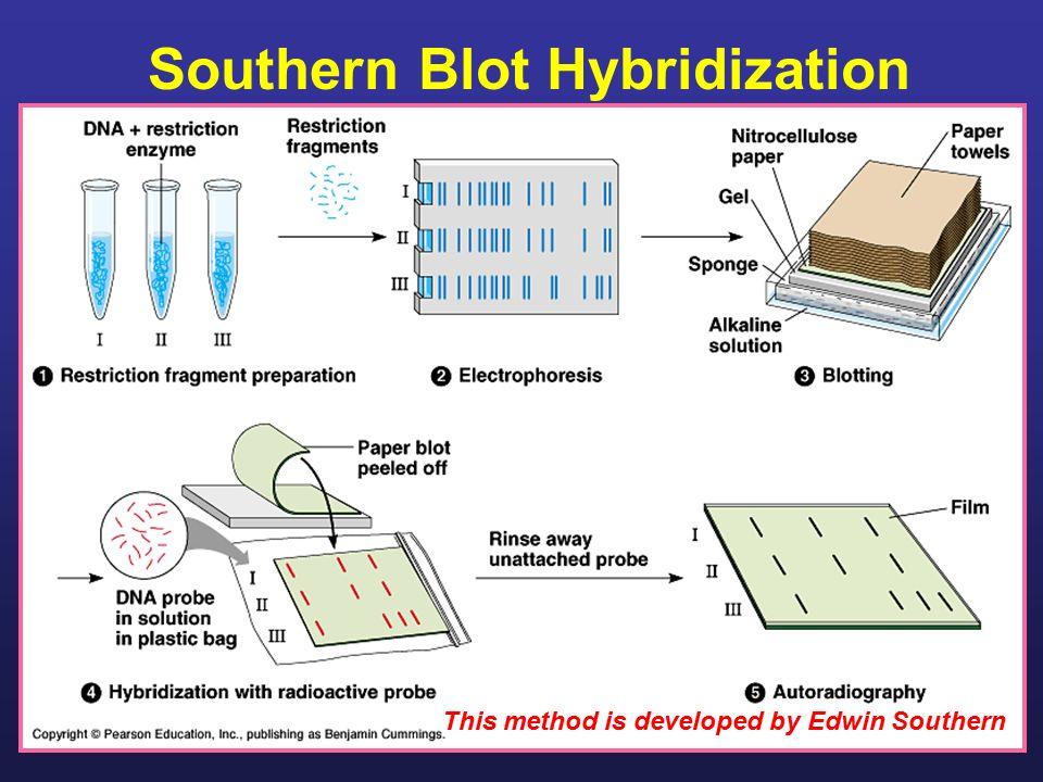 Dna slot blot hybridization