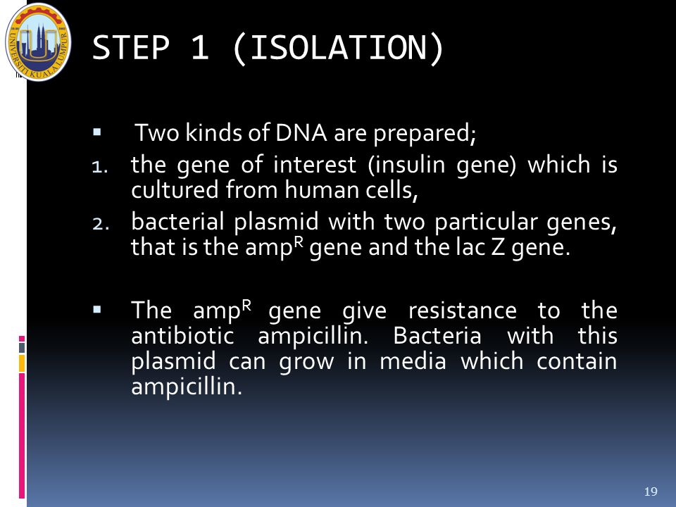 STEP 1 (ISOLATION) Two kinds of DNA are prepared;