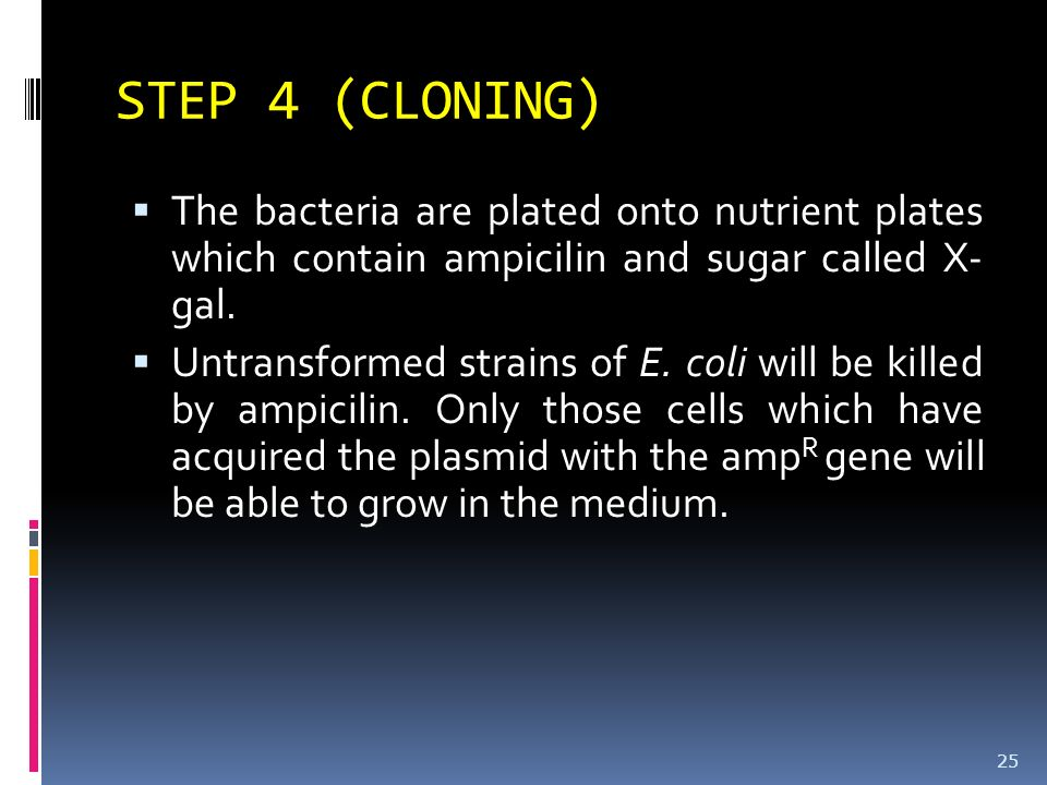 STEP 4 (CLONING) The bacteria are plated onto nutrient plates which contain ampicilin and sugar called X- gal.