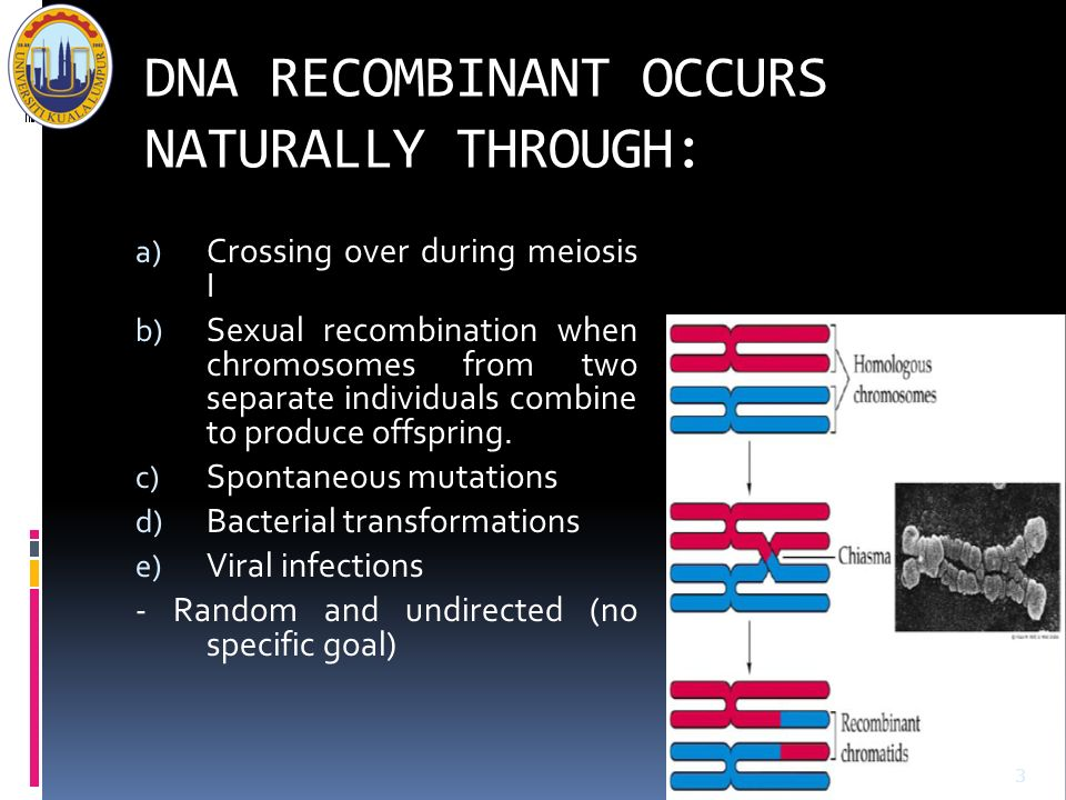 DNA RECOMBINANT OCCURS NATURALLY THROUGH: