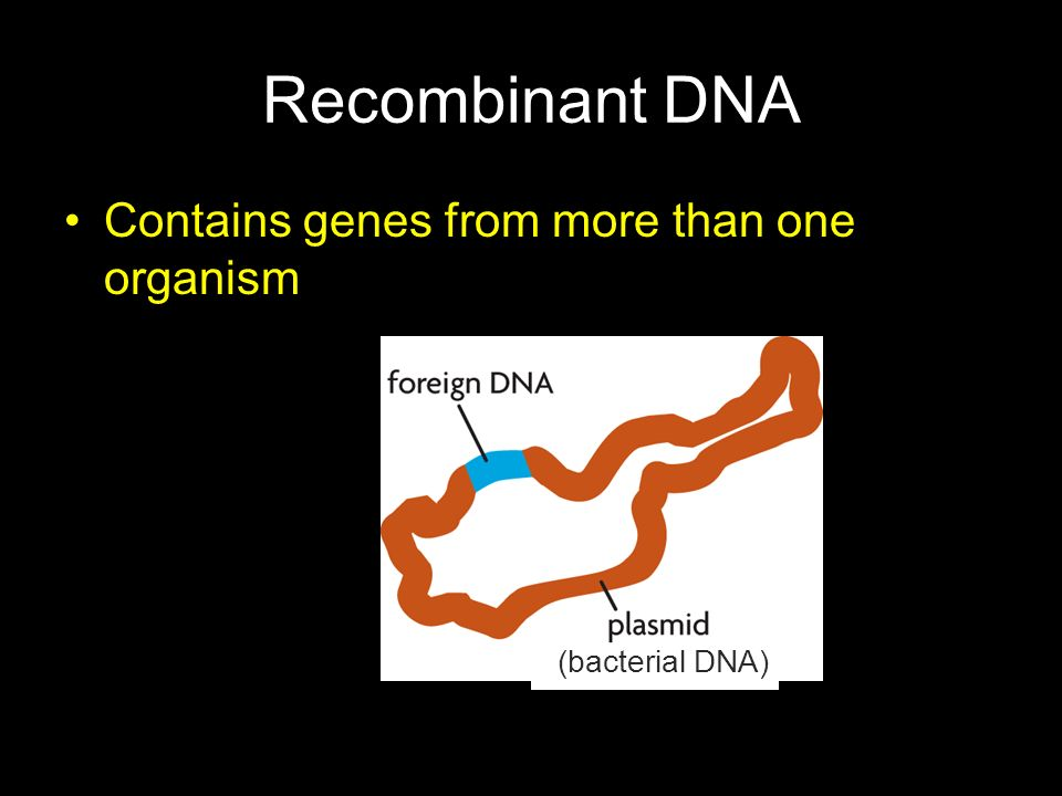 Recombinant DNA Contains genes from more than one organism