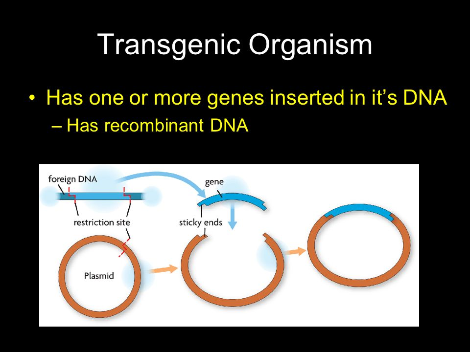 Transgenic Organism Has one or more genes inserted in it's DNA