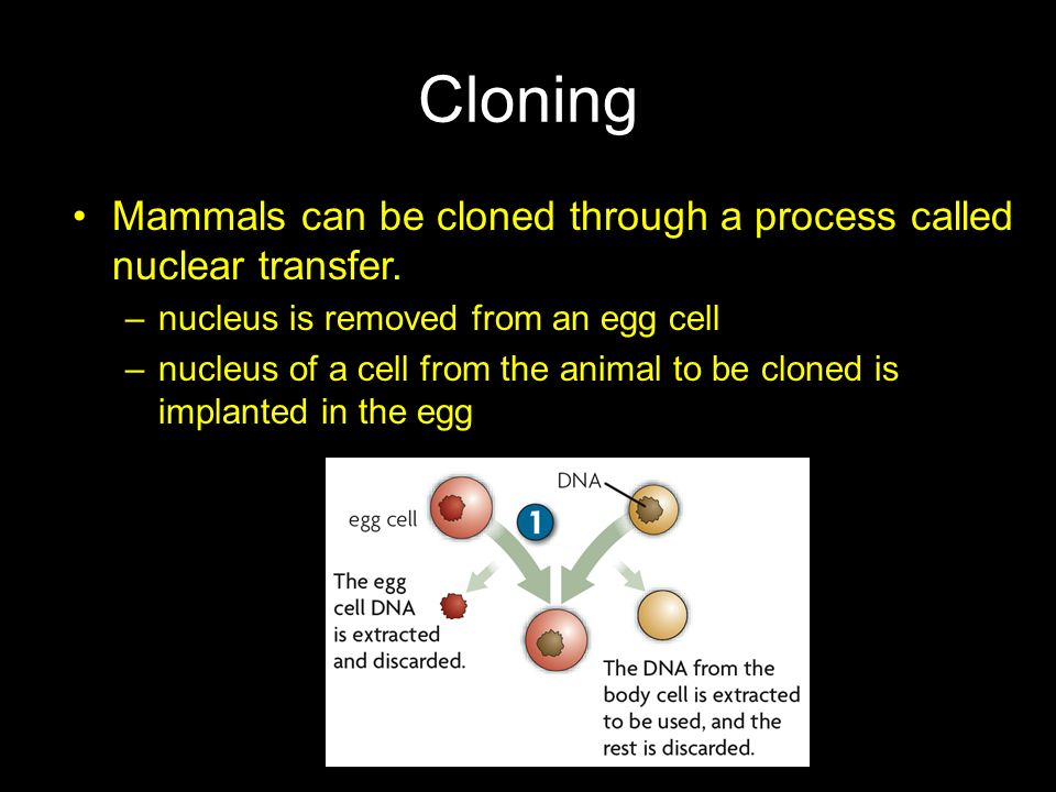 Cloning Mammals can be cloned through a process called nuclear transfer. nucleus is removed from an egg cell.