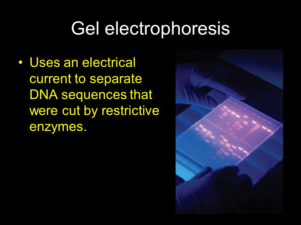 Gel electrophoresis Uses an electrical current to separate DNA sequences that were cut by restrictive enzymes.