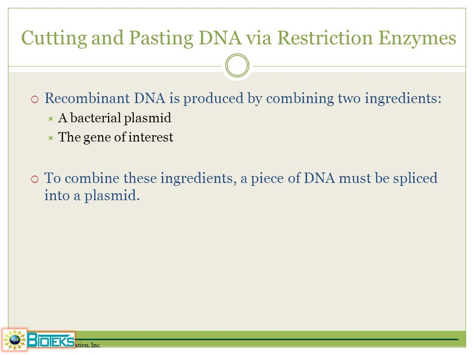 Cutting and Pasting DNA via Restriction Enzymes