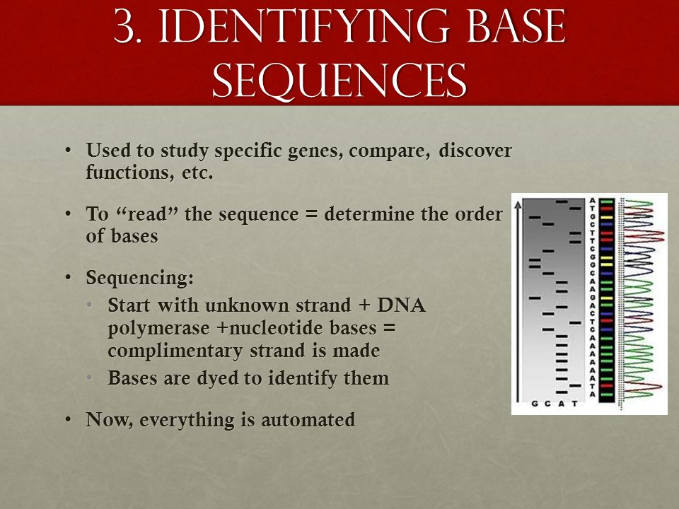3. Identifying base sequences