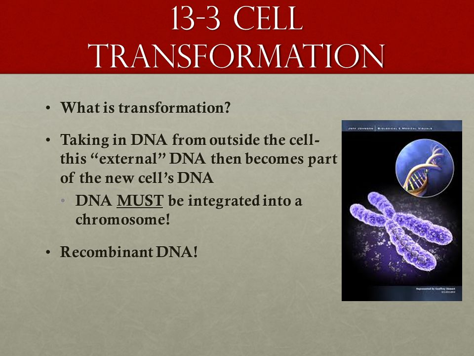 13-3 cell transformation What is transformation