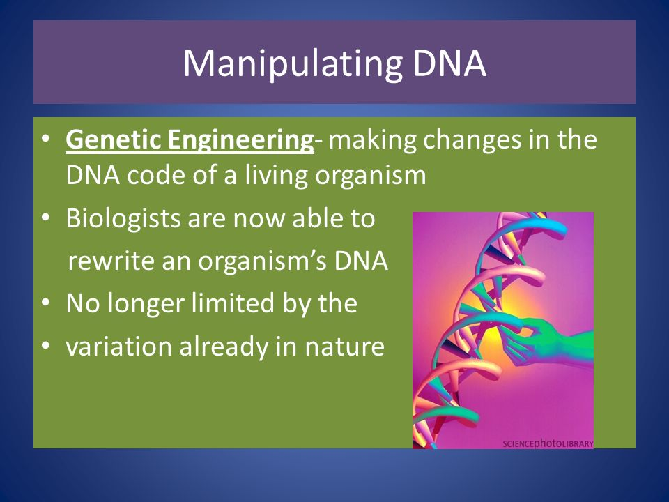 Manipulating DNA Genetic Engineering- making changes in the DNA code of a living organism. Biologists are now able to.