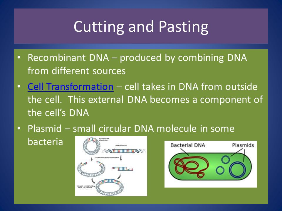 Cutting and Pasting Recombinant DNA – produced by combining DNA from different sources.