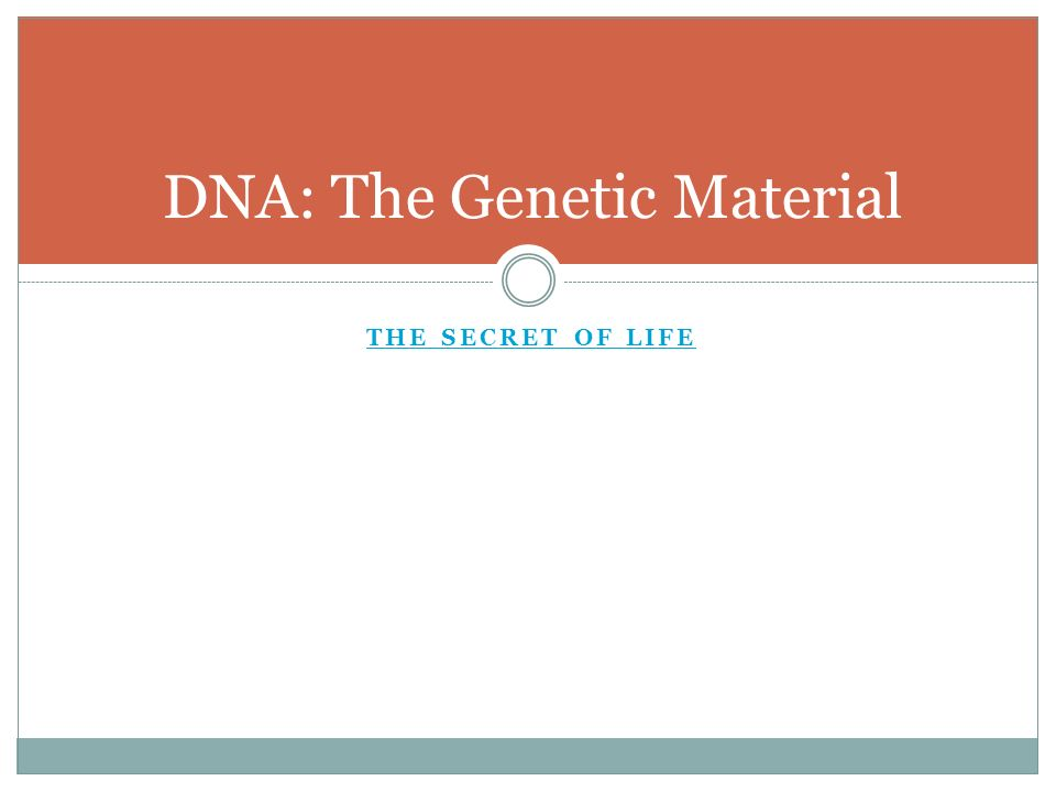 DNA Chapter ppt download – Dna the Secret of Life Worksheet