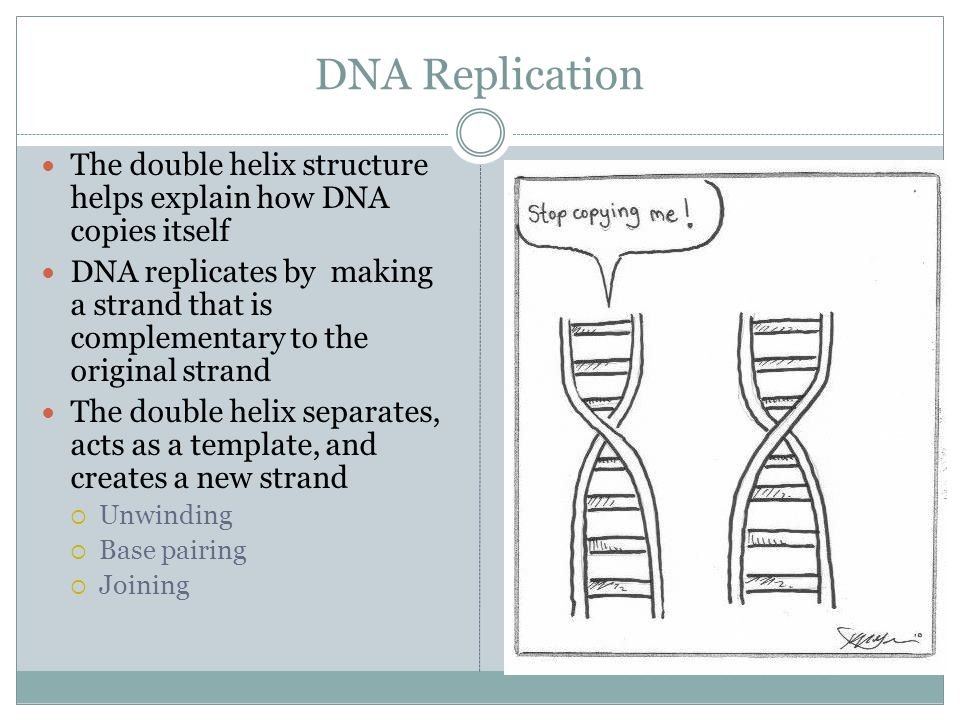 Dna base pairing worksheet pdf
