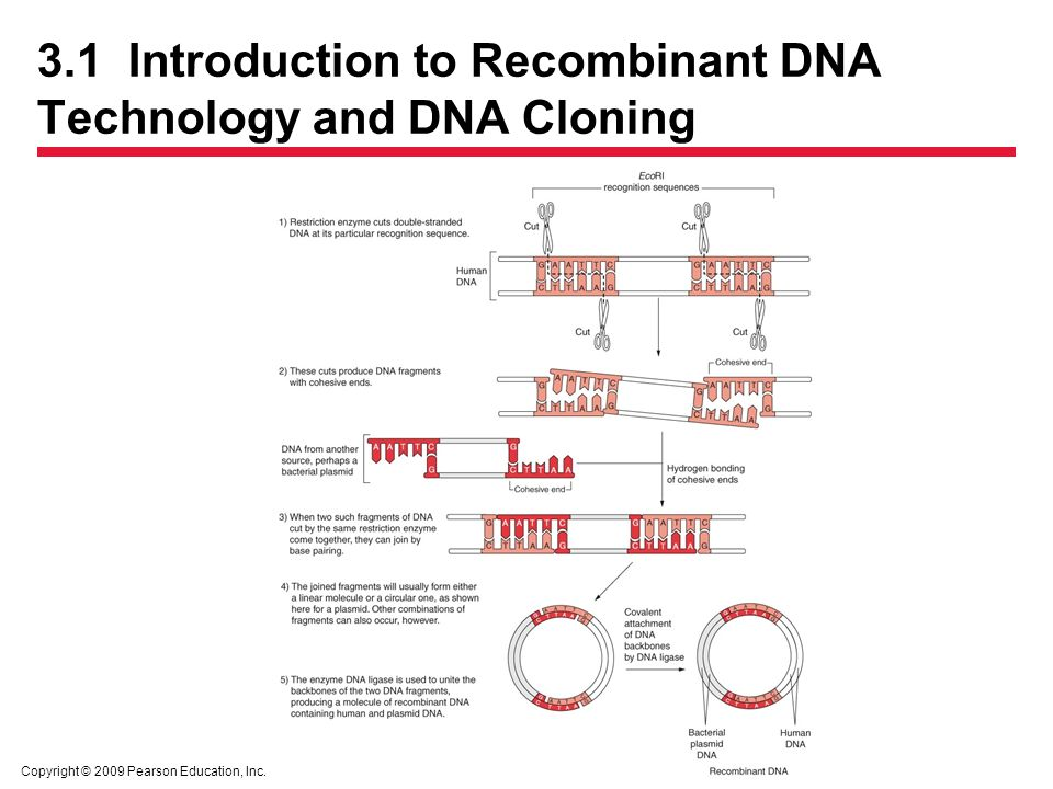an introduction to transhumanism and cloning in technology 1 what is transhumanism transhumanism is a loosely defined movement that has developed gradually over the past two decades it promotes an interdisciplinary approach to understanding and evaluating the opportunities for enhancing the human condition and the human organism opened up by the advancement of technology.