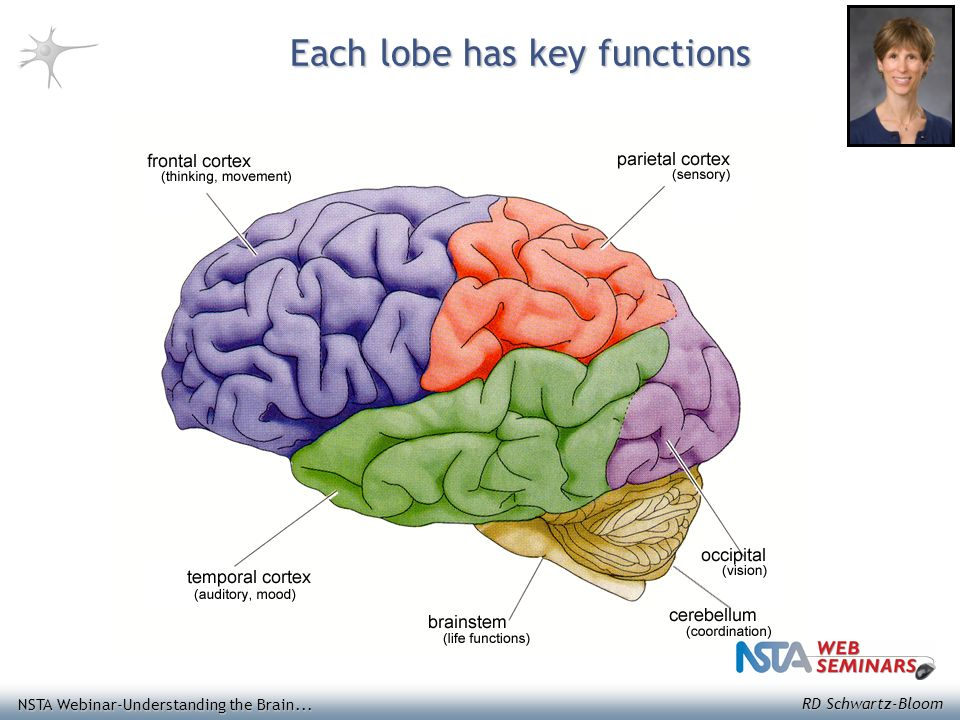 Understanding The Brain Presented By Dr Rochelle D