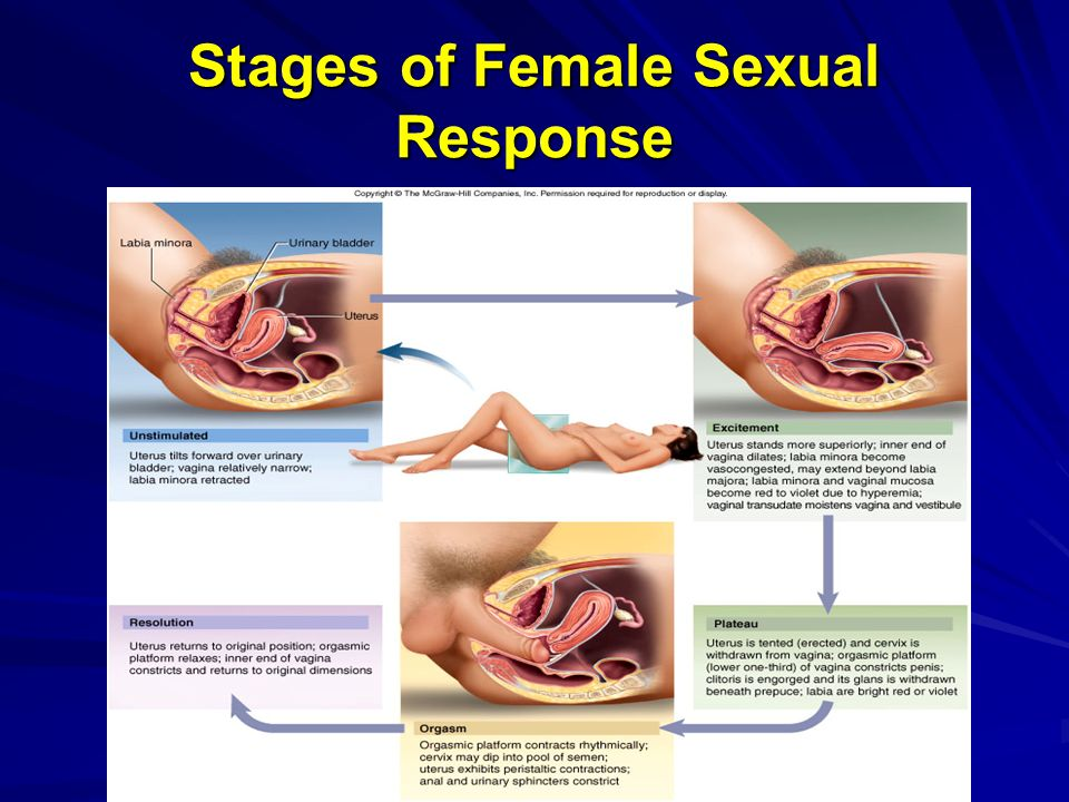 Woman Knows: Sexual Stages of Women: Ages 20-50