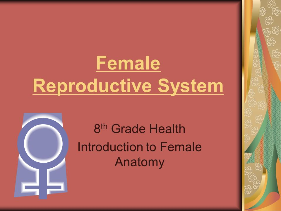 Female Reproductive System Internal Anatomy Video 3796926 - pacte ...
