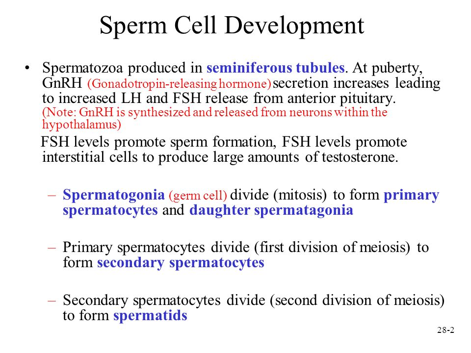 Chapter 28 Reproductive System. - ppt video online download