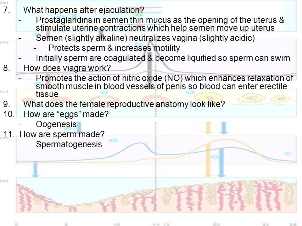 Does Viagra Work With Early Ejaculation