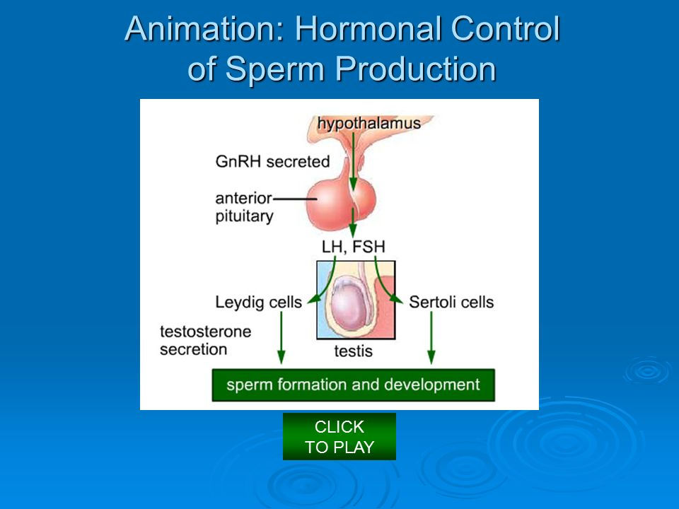 Need Hormones that influence in sperm production friend certainly