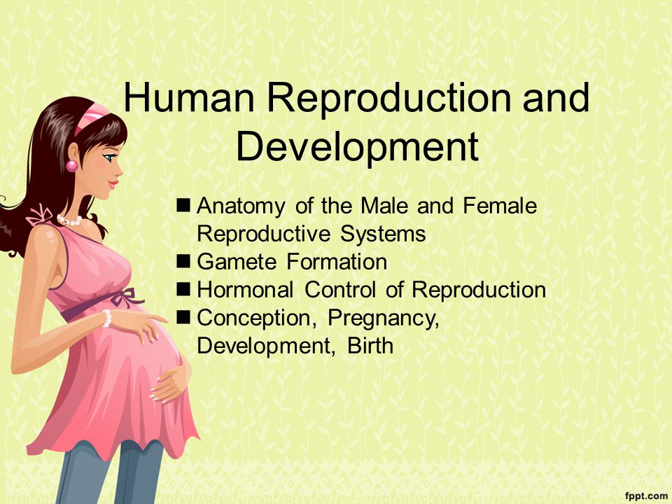 Human Reproduction And Development Ppt Video Online Download