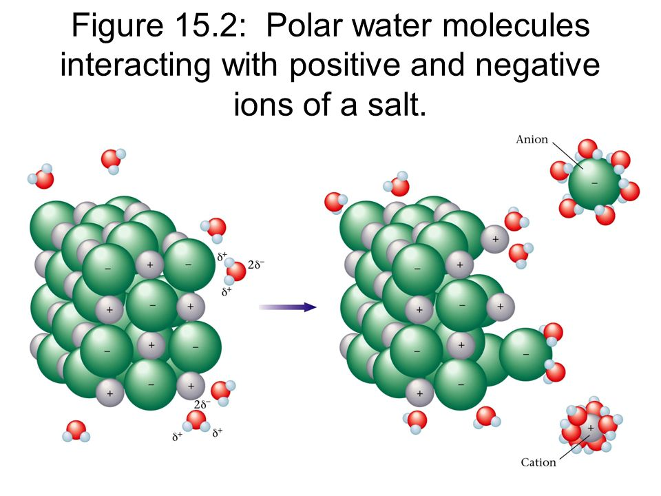 Figure 15.2: Polar water molecules interacting with positive and negative ions of a salt.