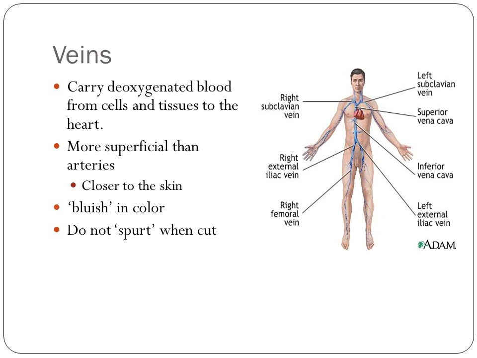 Veins Carry deoxygenated blood from cells and tissues to the heart.