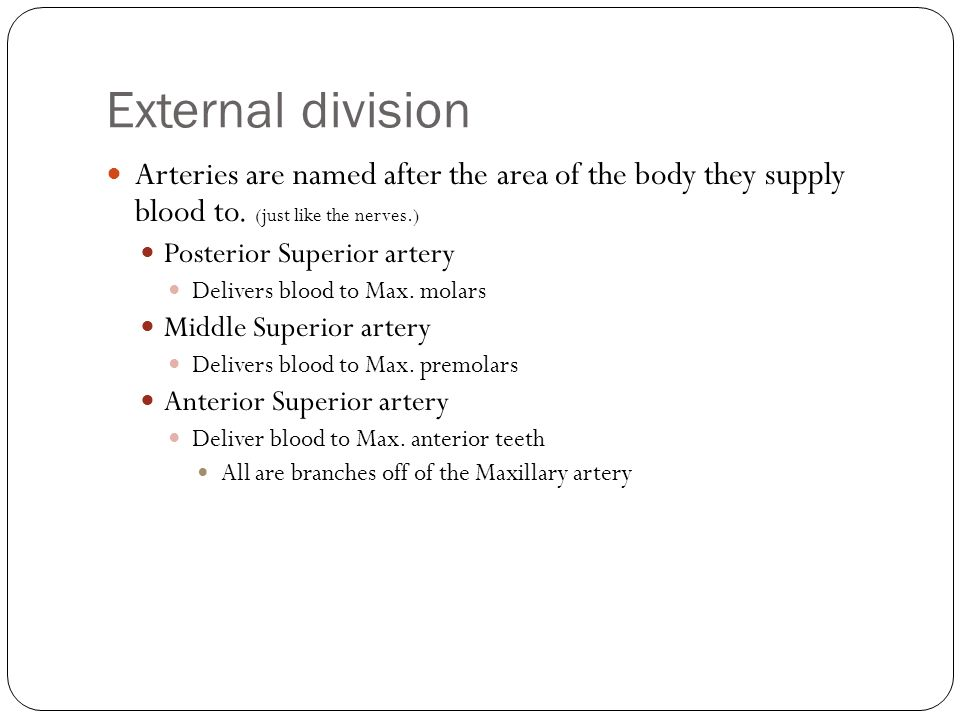 External division Arteries are named after the area of the body they supply blood to. (just like the nerves.)