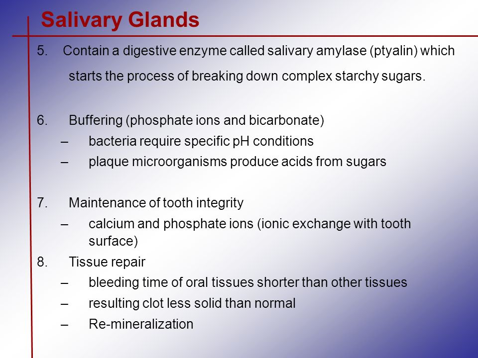salivary enzymes react with starch Catalysts called enzymes control the metabolic reactions in the body amylase is an enzyme  the starch is put into a test tube, and then the amylase is.