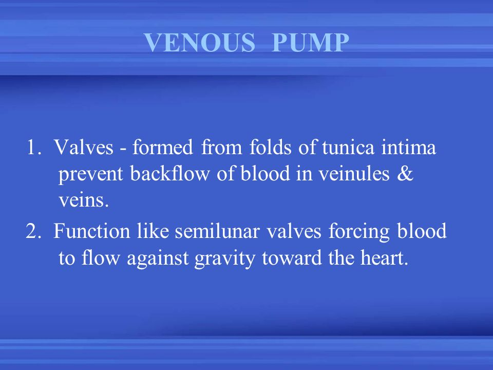 VENOUS PUMP 1. Valves - formed from folds of tunica intima prevent backflow of blood in veinules & veins.