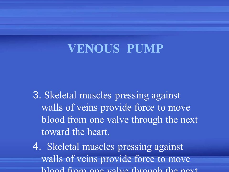 VENOUS PUMP 3. Skeletal muscles pressing against walls of veins provide force to move blood from one valve through the next toward the heart.