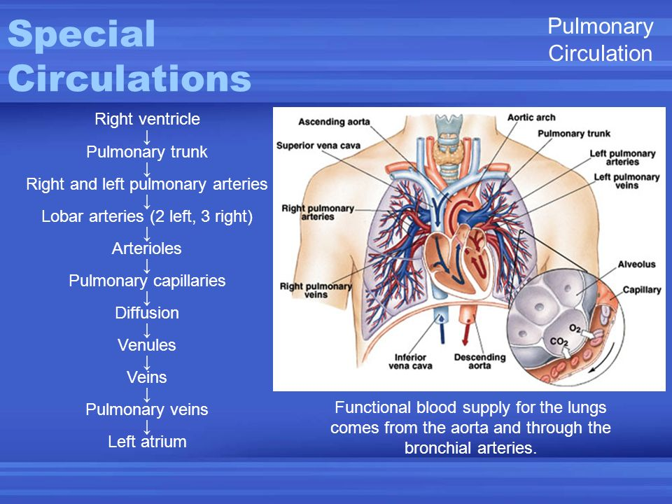 Special Circulations Pulmonary Circulation Right ventricle ↓