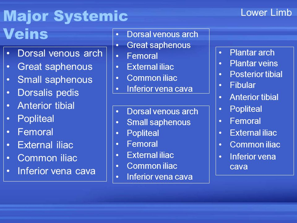 Major Systemic Veins Lower Limb Dorsal venous arch Great saphenous