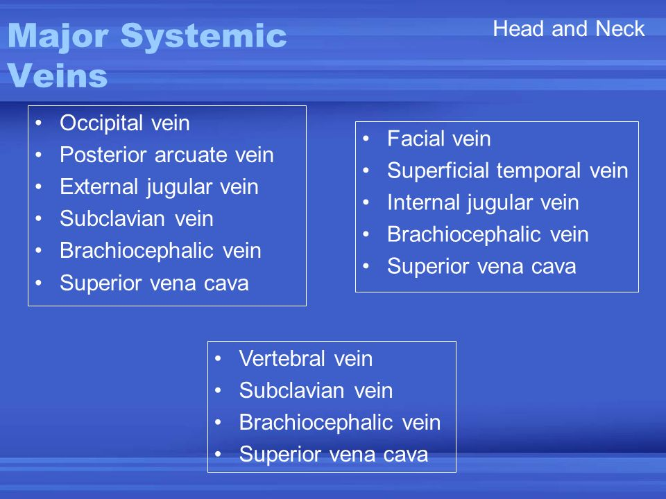 Major Systemic Veins Head and Neck Occipital vein