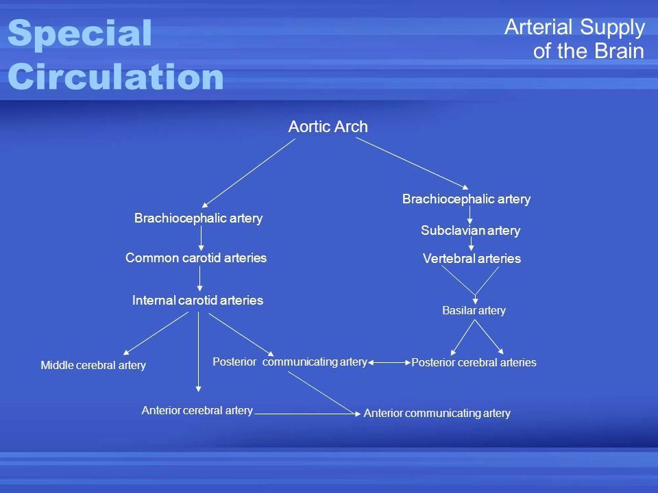 Posterior cerebral arteries