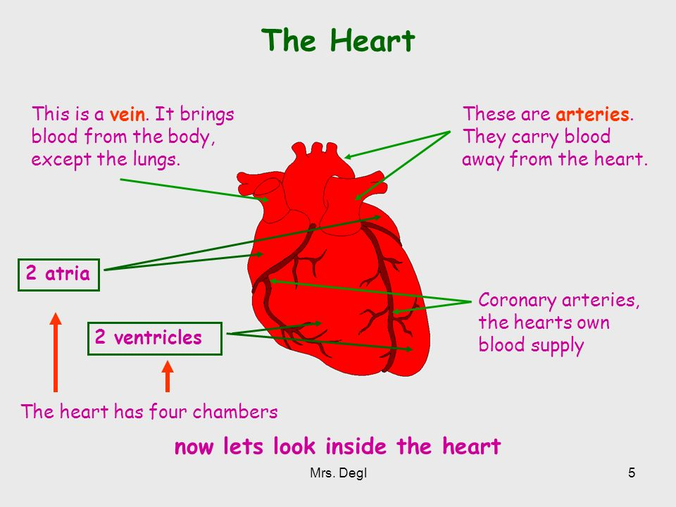 now lets look inside the heart