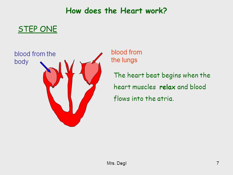 How does the Heart work STEP ONE blood from the lungs