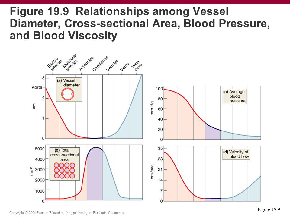 relationship of vessel diameter blood volume and pressure