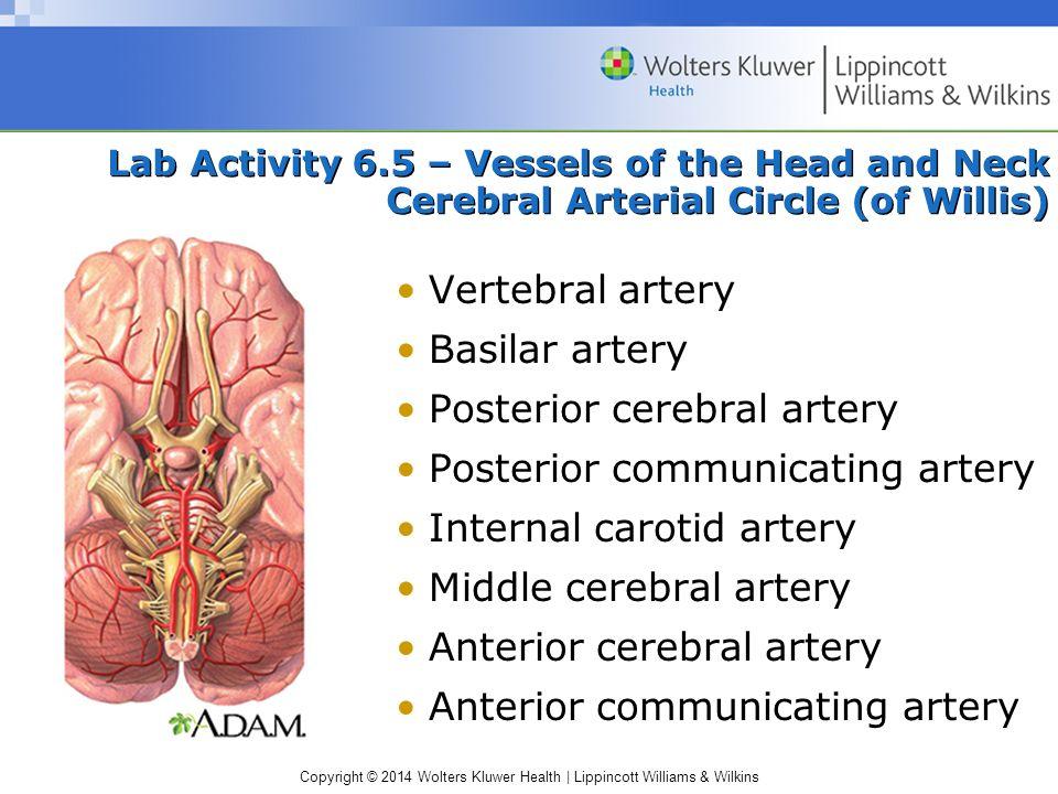 Posterior cerebral artery Posterior communicating artery