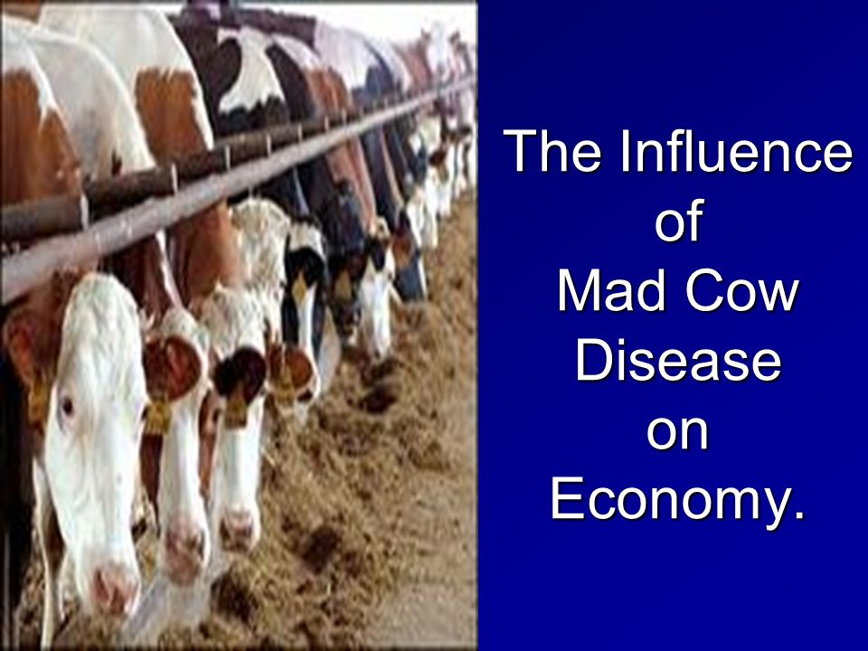 the cow theory of economics What is the purpose of research about economics research helps to test a hypothesis or theory by looking up the people from the war killed all the cow.