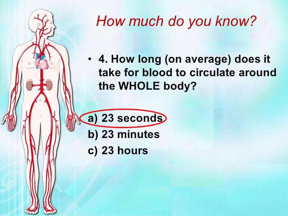 How long does viagra last in the body