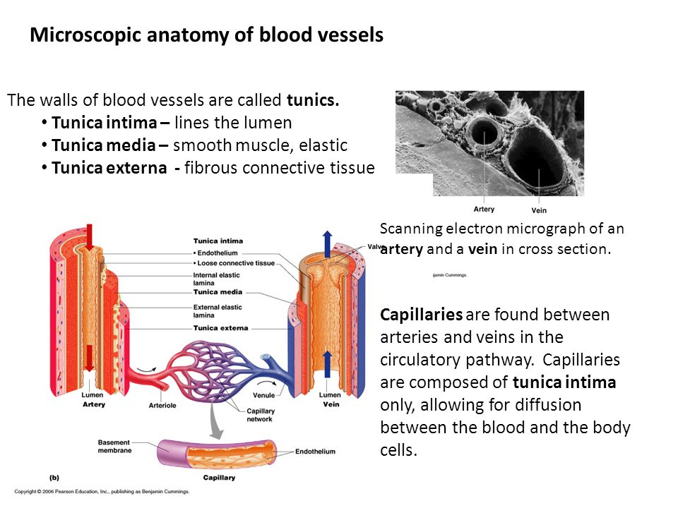Anatomy of blood cells exercise 32 Research paper Academic Writing ...