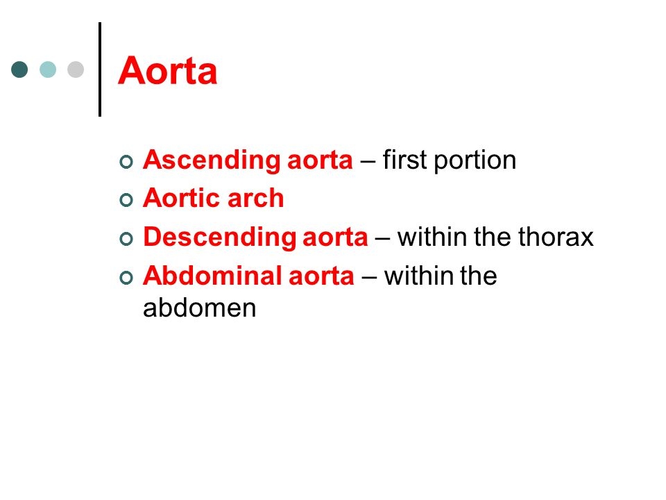 Aorta Ascending aorta – first portion Aortic arch