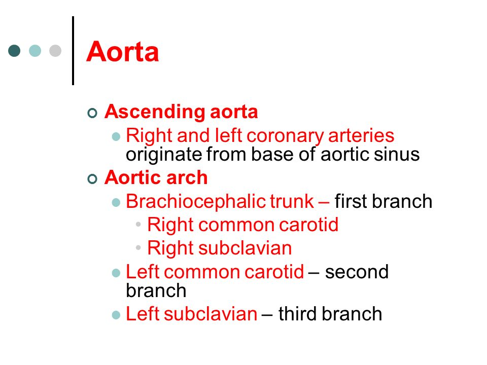 Aorta Ascending aorta. Right and left coronary arteries originate from base of aortic sinus. Aortic arch.