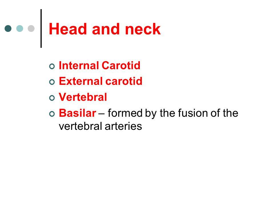 Head and neck Internal Carotid External carotid Vertebral