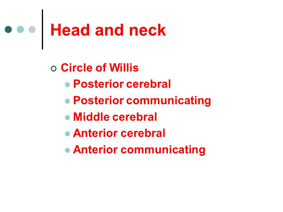 Head and neck Circle of Willis Posterior cerebral