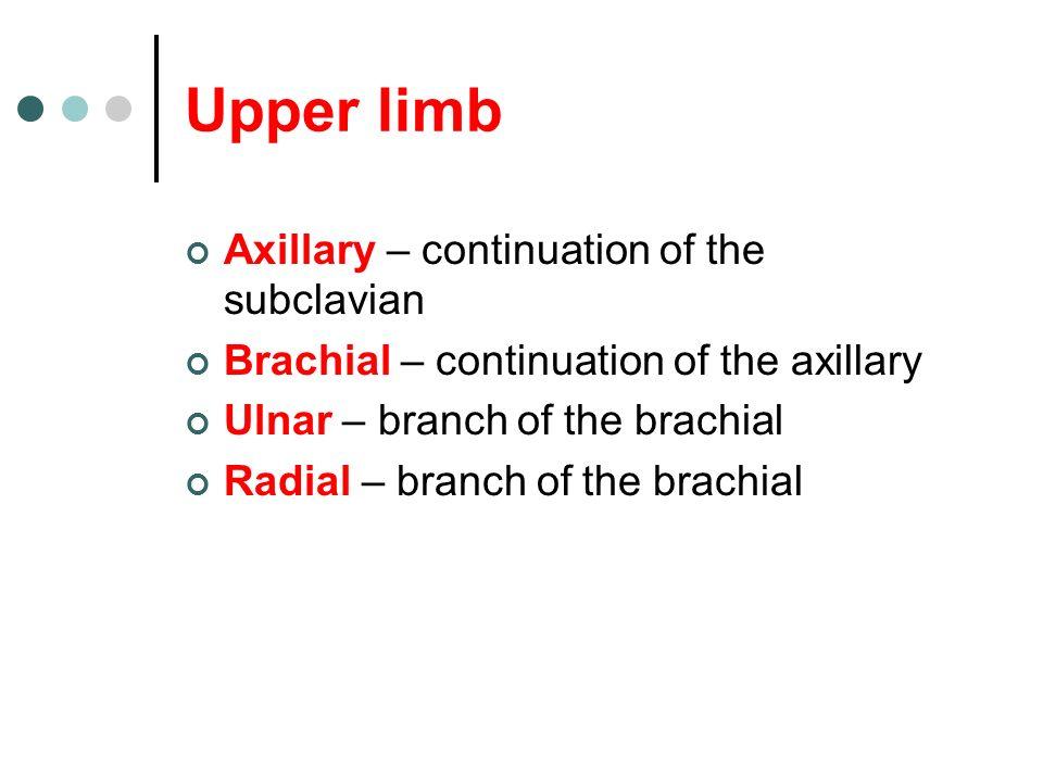 Upper limb Axillary – continuation of the subclavian
