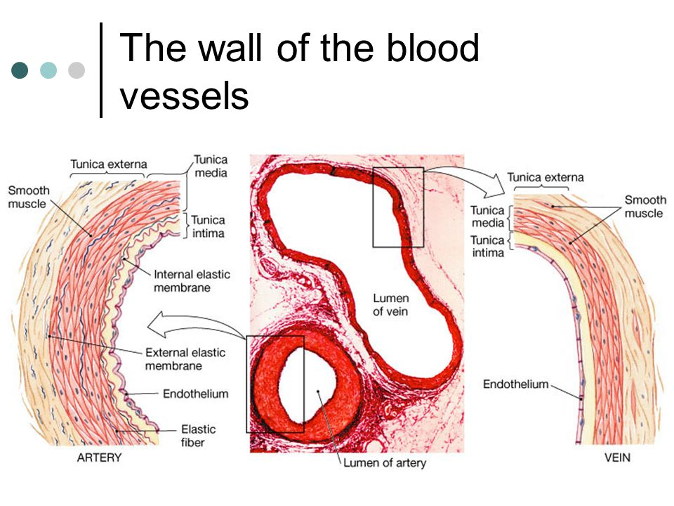The wall of the blood vessels