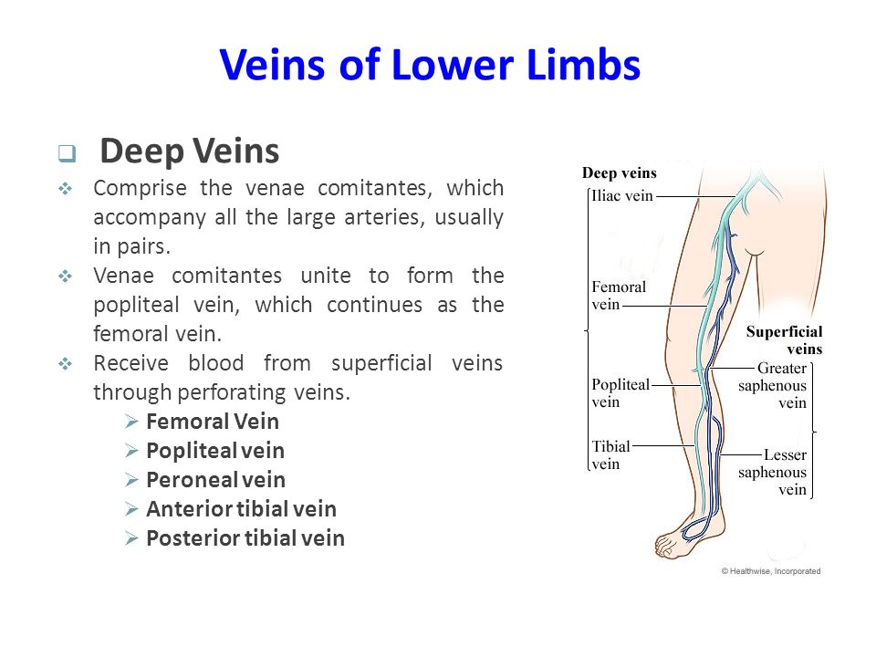 Veins of Lower Limbs Deep Veins